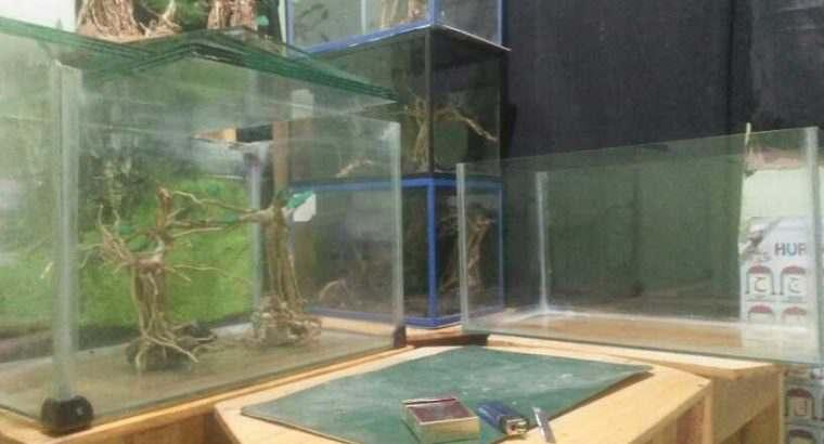 aquarium dan akar kayu senggani