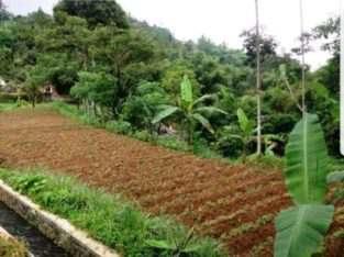 Jual Tanah 300 m2 di Puncak (Cisarua,Bogor) – Cocok u/Villa (ISTIMEWA)
