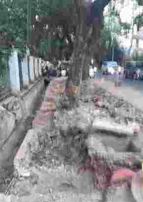 jasa tebang pohon dki jakarta