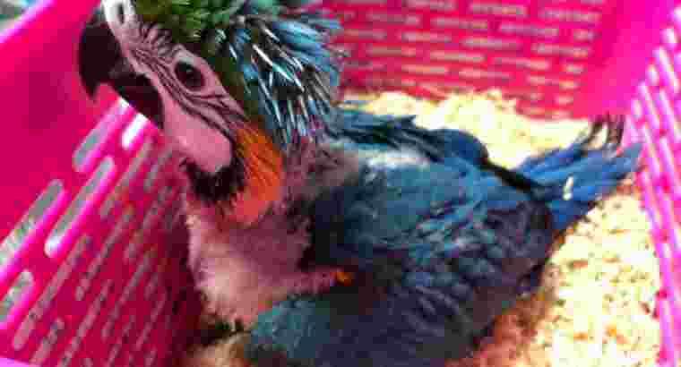 Jual Burung Macaw Parrot dan Kakatua