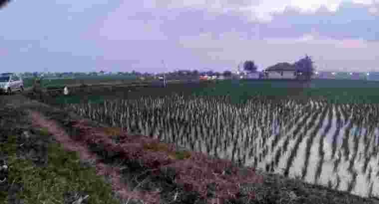 jual tanah sawah