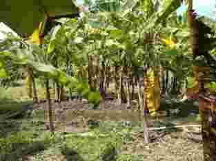 Tanah Kering Sidoarjo
