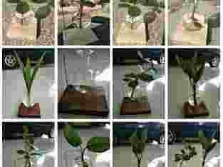 Pot/vas bunga gantung kaca lucu dengan kayu Hexagon tidak termasuk bunga Dekorasi meja kantor, kafe, rumah dll