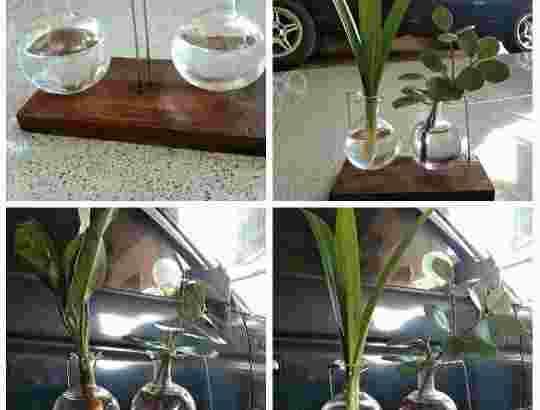 Dobel Pot/vas bunga gantung kaca lucu dengan kayu Hexagon tidak termasuk bunga Dekorasi meja kantor, kafe, rumah dll