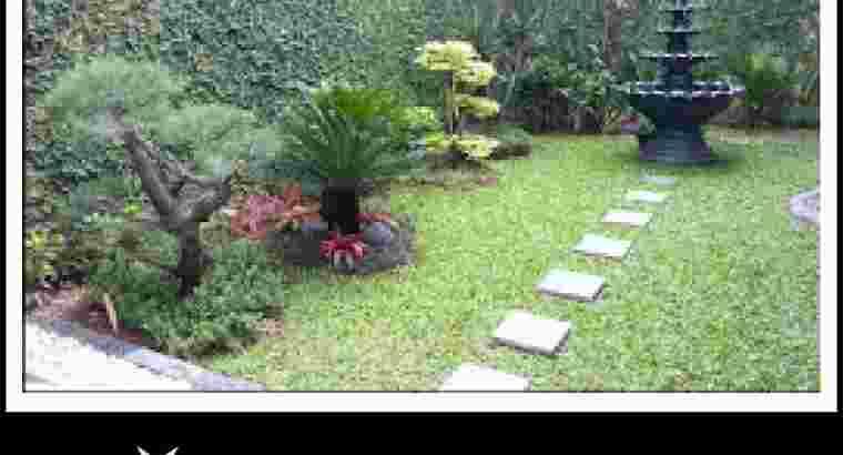 tukang taman minimalis murah