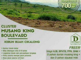 tanah kavling produktif murah dan menguntungkan