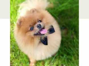 penitipan anjing di kenjeran