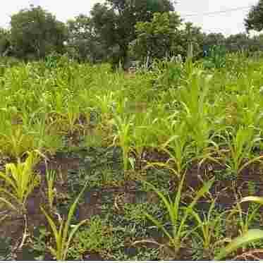 Dijual Tanah Di Rembang Pasuruan – 0822.3111.5796