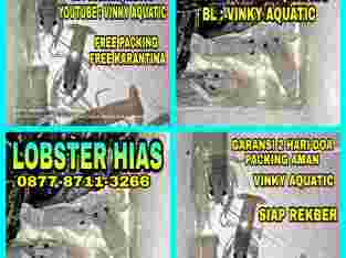 LOBSTER HIAS AIR TAWAT