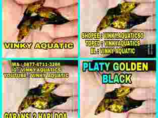 PLATY GOLDEN BLACK
