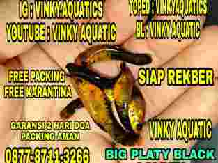 BIG PLATY GOLDEN BLACK