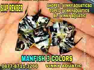 MANFISH 3 COLORS