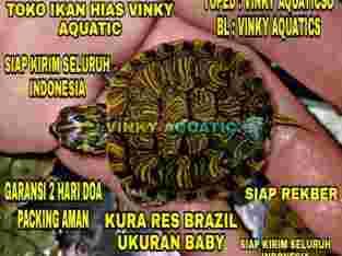 KURA RES BRAZIL BABY