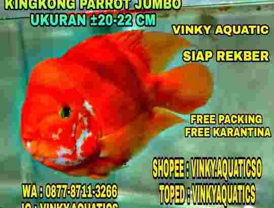 RED KINGKONG PARROT JUMBO 20-22 CM