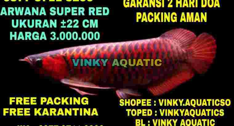 ARWANA SUPER RED 22 CM