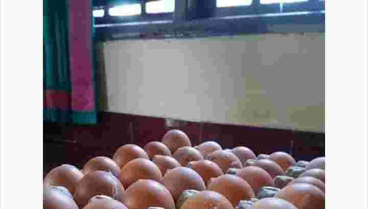 Telur ayam ras campur sama tanggung + jika beruntung dapet dua kuning telur dalam satu telur